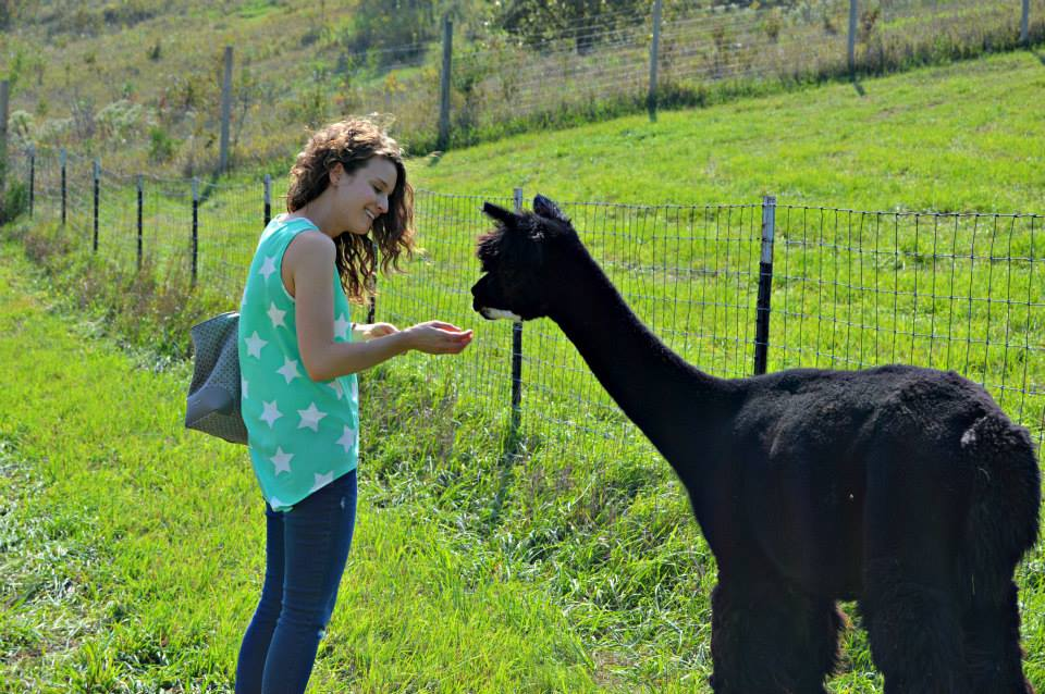 Hannah Feeding Alpacas Her Heartland Soul Erin Fairchild