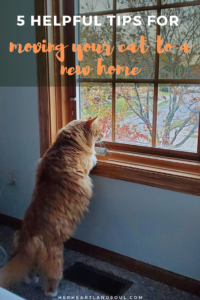 6 hehlpful tips for moving your cat to a new home - Her Hearltand Soul