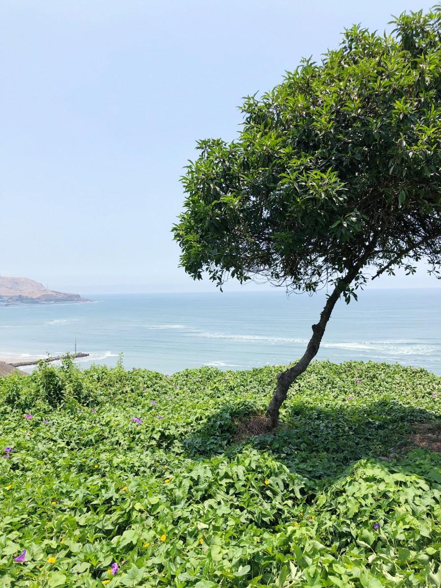 Miraflores Lima Peru Beach Ocean Coast - Her Heartland Soul