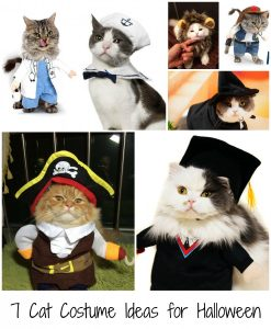 7 Cat Costume Ideas for Halloween