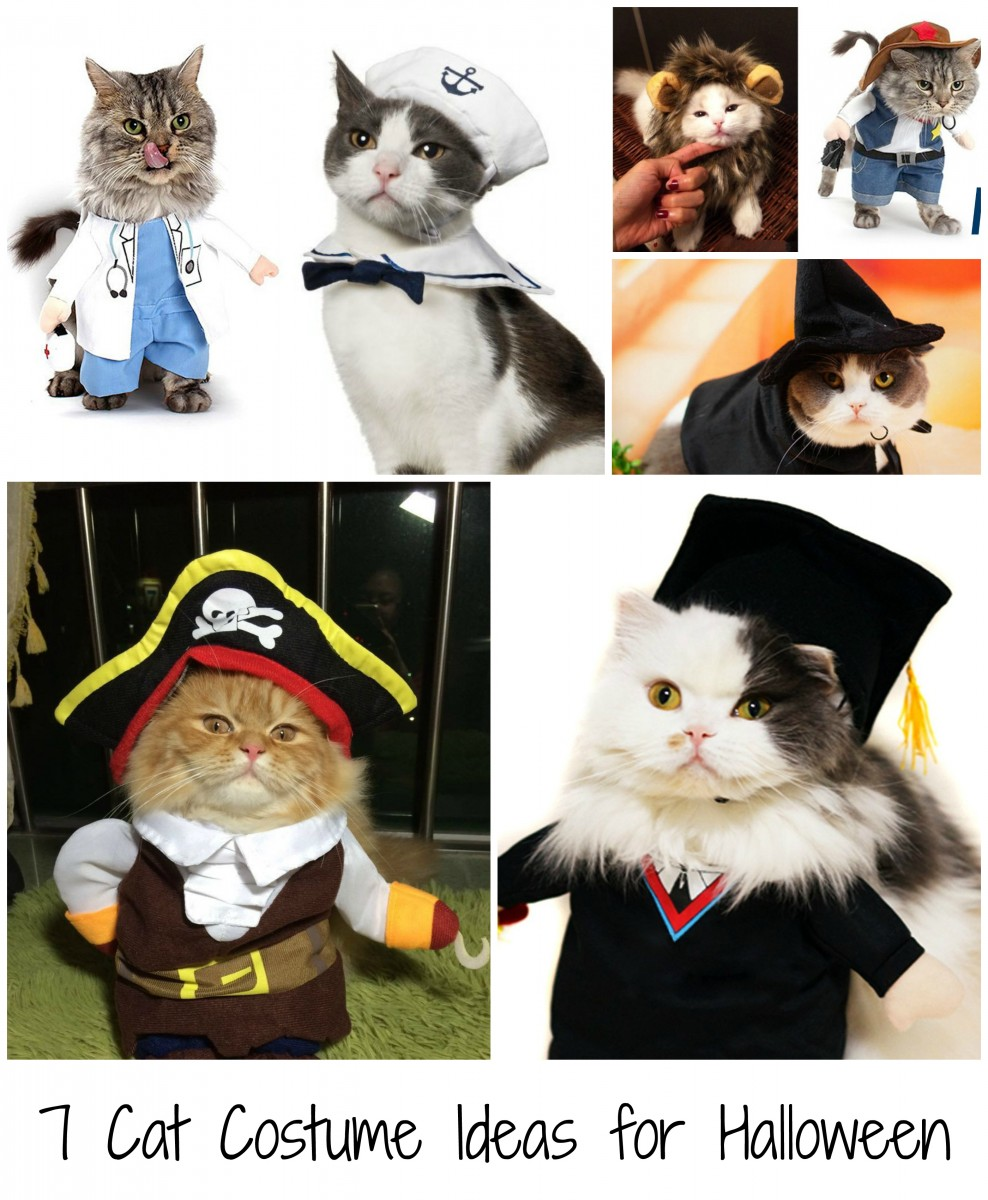 7 cat costume ideas for halloween her heartland soul