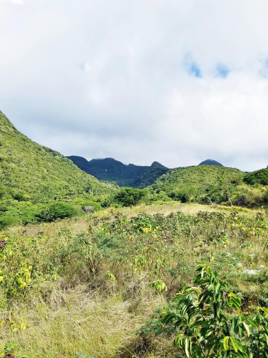Horseback Riding St. Kitts Her Heartland Soul