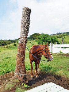 Horseback Riding in St. Kitts