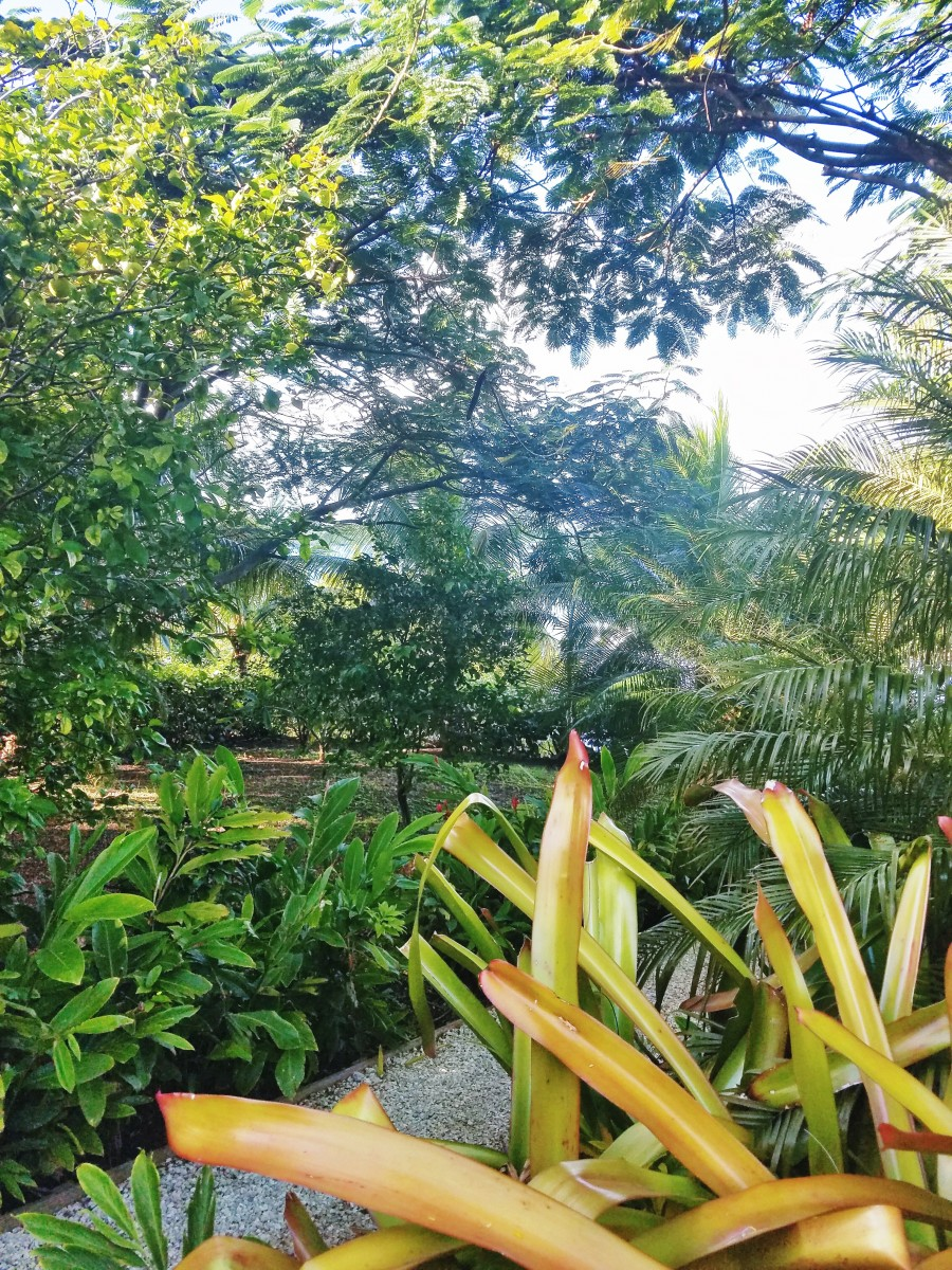 Hiking in Antigua Her Heartland Soul