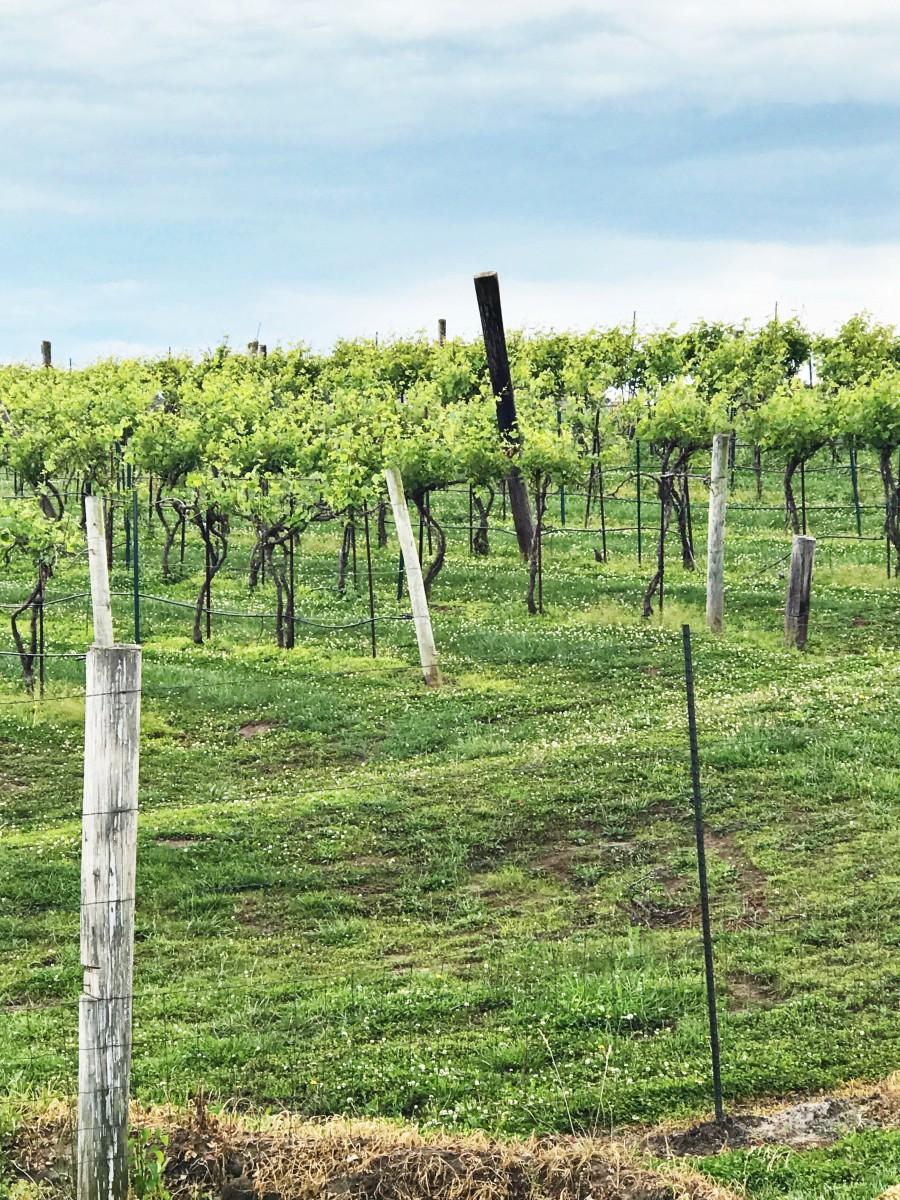 Rowe Ridge Winery Kansas City Kansas Her Heartland Soul