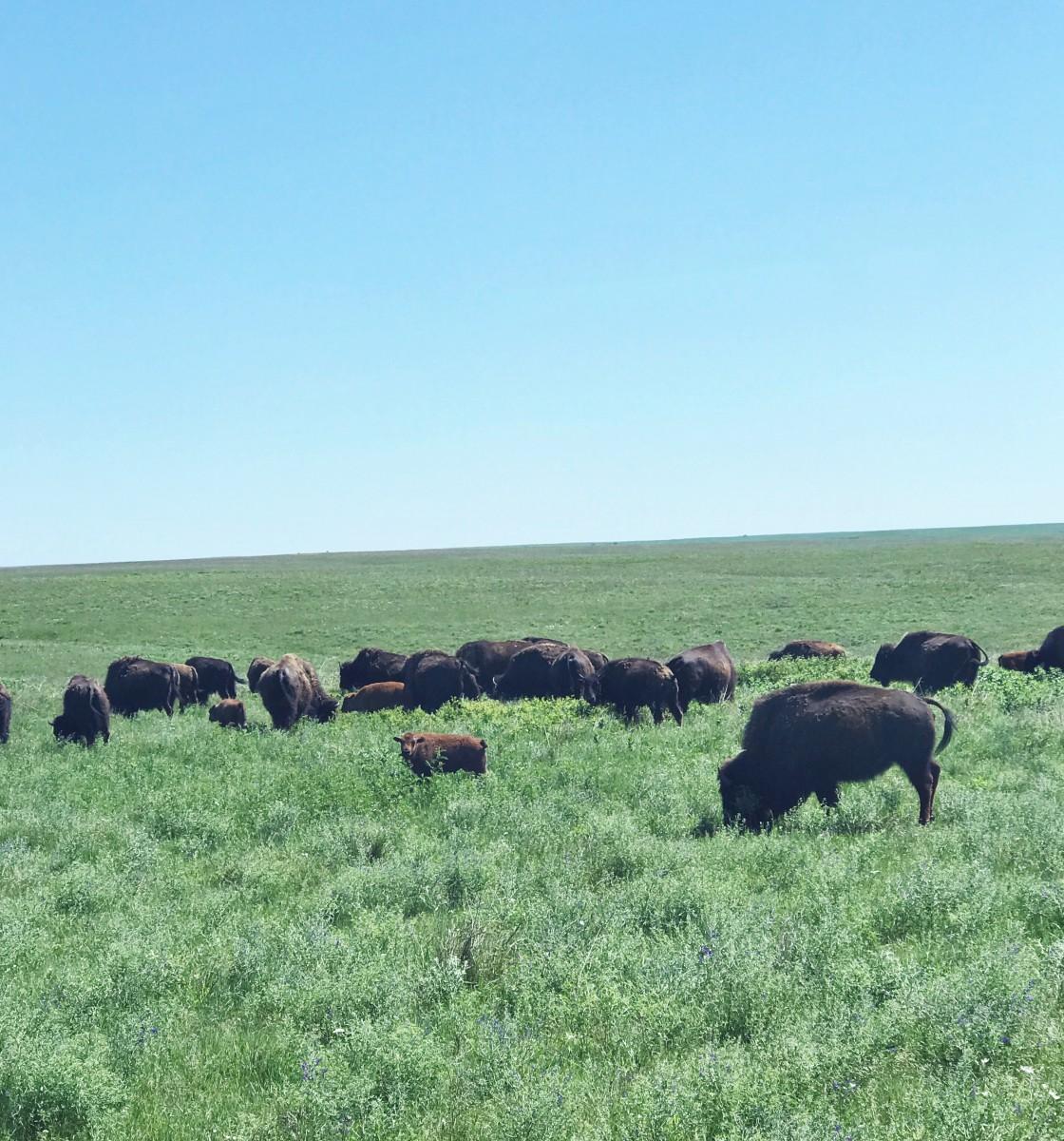 Tallgrass Prairie National Preserve Kansas Her Heartland Soul