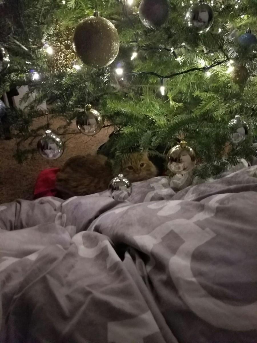 Punkin Christmas Tree Her Heartland Soul