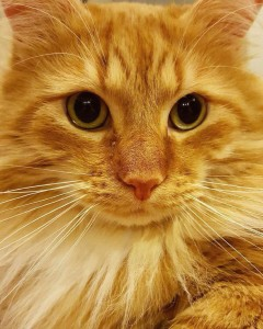 Science Proves Cats are Purrfect