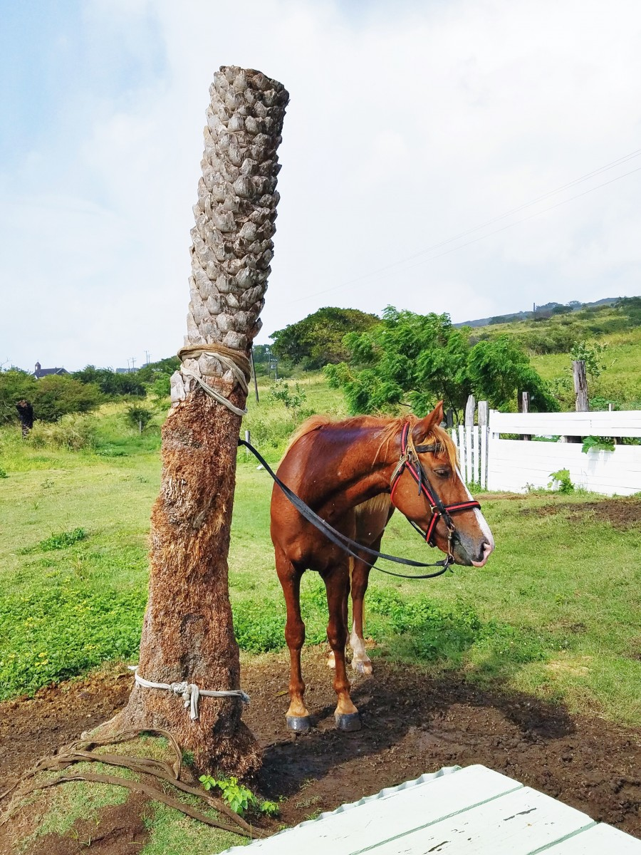 Horseback Riding in St. Kitts in the Southern Caribbean - Her Heartland Soul