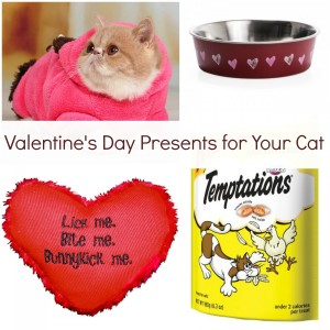 Valentine's Day Presents For Your Cat