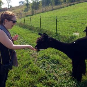 Alpaca 3 Erin Fairchild Her Heartland Soul