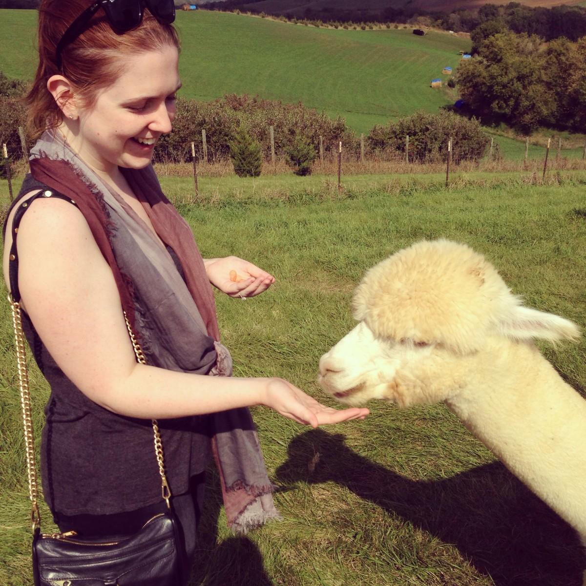 Alpaca 7 Erin Fairchild Her Heartland Soul