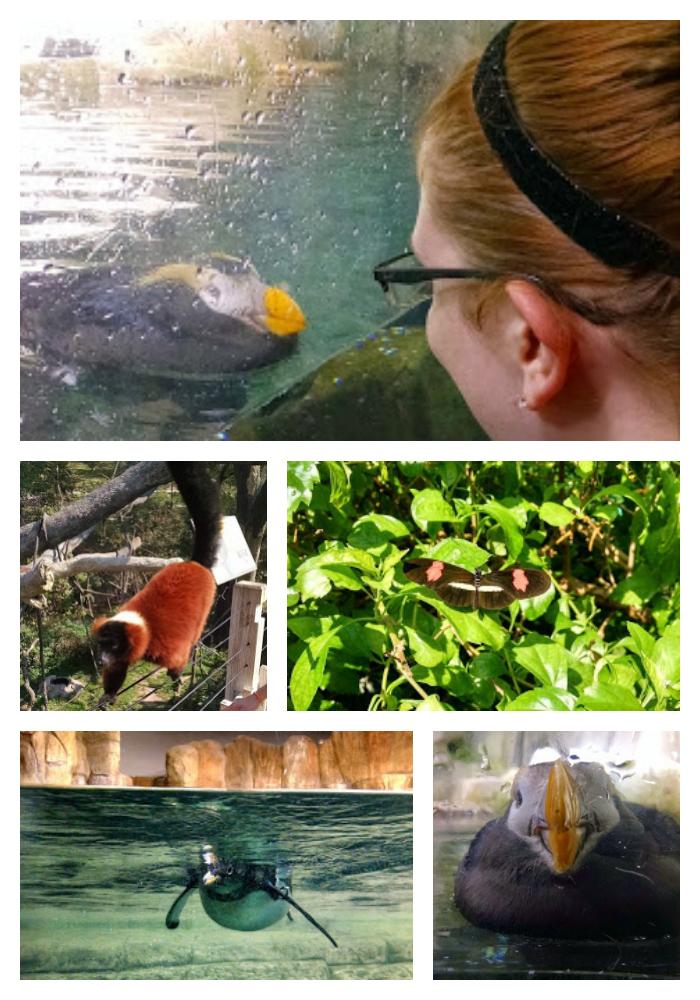 Omaha Zoo Erin Fairchild Her Heartland Soul